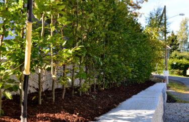 Trest Entreprenør har bygget mur av granitt og planting av Bøk hekk i Oslo og Akershus