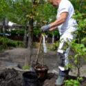 Trest Entreprenør planting og landskapsarbeid i klassiske og moderne hage i Oslo og Akershus