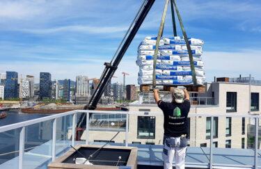 Trest Entreprenør planting på takterrasse i moderne hage i Oslo og Akershus